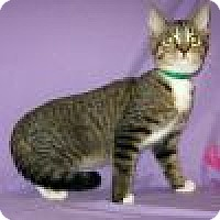 Adopt A Pet :: Lambert - Powell, OH