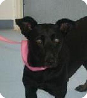 Shepherd (Unknown Type) Mix Dog for adoption in Walden, New York - Chirp