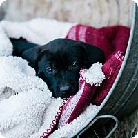 Adopt A Pet :: Seneca $250 - Seneca, SC