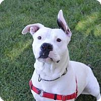 Adopt A Pet :: Floyd - Mebane, NC