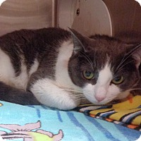 Adopt A Pet :: NOODLES - Marietta, GA