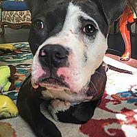 Terrier (Unknown Type, Medium) Mix Dog for adoption in Point Pleasant, Pennsylvania - Dalon