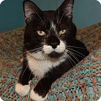Adopt A Pet :: Checker - Cincinnati, OH