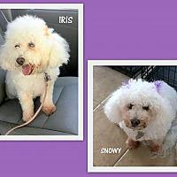 Adopt A Pet :: Iris and Snowy (GrandPaws) - Lindsay, CA