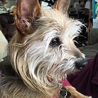 Adopt A Pet :: CORKY - Oakland, CA