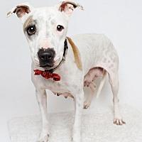 Adopt A Pet :: Precious - Jefferson, LA