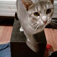 Adopt A Pet :: Chelsey - Oviedo, FL