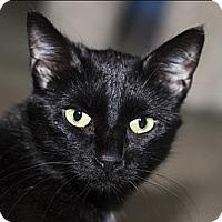 Adopt A Pet :: MK - Lombard, IL