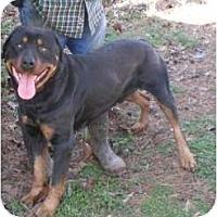Adopt A Pet :: Butch - Douglasville, GA