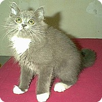 Adopt A Pet :: Baby Willie - Columbus, OH