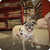 Adopt A Pet :: Chico - Austin, TX