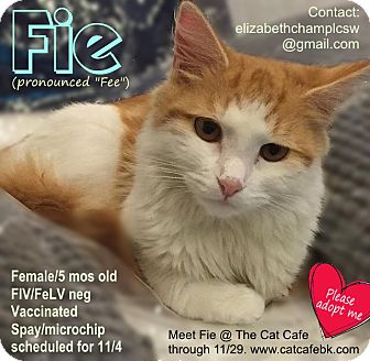 Domestic Mediumhair Kitten for adoption in Brooklyn, New York - Fie