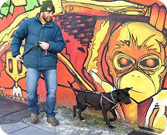 Labrador Retriever Mix Dog for adoption in Jersey City, New Jersey - Egon Spengler