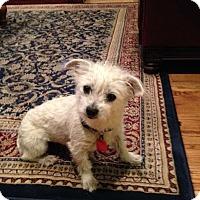 Adopt A Pet :: Leia - Houston, TX