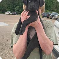 Adopt A Pet :: Noah - South Dennis, MA
