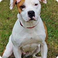 Adopt A Pet :: Zandy in CT - Manchester, CT