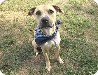 Shepherd (Unknown Type) Mix Dog for adoption in Lexington, North Carolina - Skip