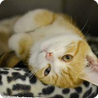 Adopt A Pet :: Sprinkles - Byron Center, MI
