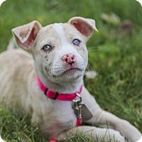 Adopt A Pet :: Firefly - Dayton, OH