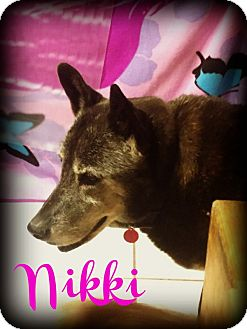 Siberian Husky/German Shepherd Dog Mix Dog for adoption in Phoenix, Arizona - NIKKI