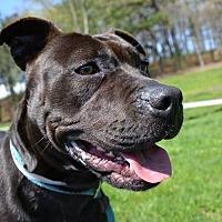 Adopt A Pet :: Maisy - Brookhaven, NY