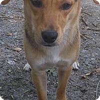 Adopt A Pet :: Noble - Bryson City, NC