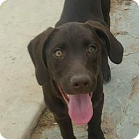 Adopt A Pet :: Bindie - Las Cruces, NM