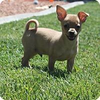 Adopt A Pet :: Charlie - Henderson, NV