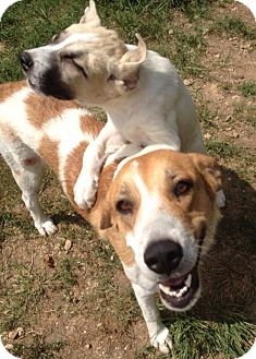 Hound (Unknown Type) Mix Dog for adoption in Mount Holly, New Jersey - Maddie