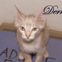 Adopt A Pet :: Derek - Middleburg, FL