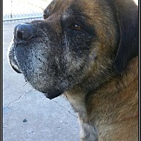 Adopt A Pet :: Goose - Hospice - Edmond, OK