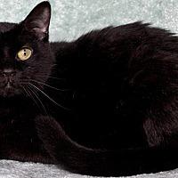 Adopt A Pet :: Spooky - St Louis, MO