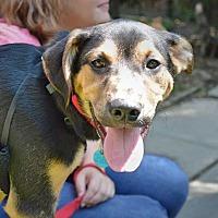 Adopt A Pet :: Zach (Has Application) - Washington, DC