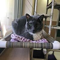 Adopt A Pet :: Princess - Reno, NV