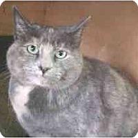 Adopt A Pet :: Shirley - Lunenburg, MA