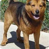 Adopt A Pet :: Rusty - Fowler, CA
