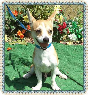 Chihuahua Mix Dog for adoption in Marietta, Georgia - STUBBS