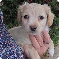Adopt A Pet :: Spring - Torrance, CA