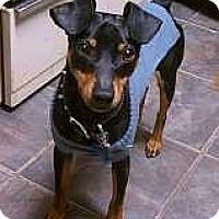 Adopt A Pet :: Domino - Nashville, TN