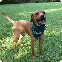 Adopt A Pet :: Eddie - Mocksville, NC