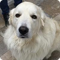 Adopt A Pet :: Jack ADOPTION PENDING - Bloomington, IL