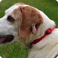 Adopt A Pet :: Pick - Bakersville, NC