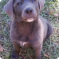 Adopt A Pet :: Clove - Adopted - Croydon, NH