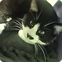 Adopt A Pet :: Groucho - Medina, OH