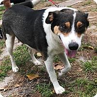 Adopt A Pet :: Alice - Boca Raton, FL