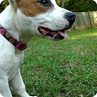 Adopt A Pet :: Ella - Atlanta, GA