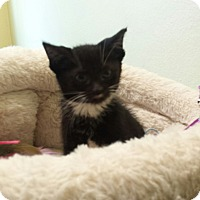 Adopt A Pet :: Evangeline - Chelsea - Kalamazoo, MI