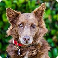 Adopt A Pet :: Chopin - San Diego, CA