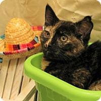Adopt A Pet :: Lydia - Bonsall, CA
