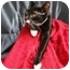 Photo 1 - Domestic Shorthair Cat for adoption in Orlando, Florida - Oreo